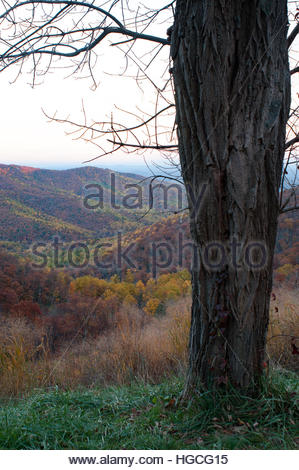 Late autumn in the Blue Ridge in Shenandoah National Park - Stock Photo