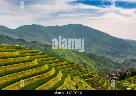 View of the Longsheng Rice Terraces (Dragon's Backbone Rice Terraces) in Guangxi, China. - Stock Photo