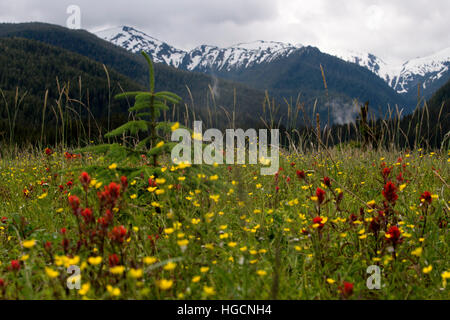 Landscape in Scenery Cove, Thomas Bay, Petersburg, Southeast Alaska. Thomas Bay is located in southeast Alaska. - Stock Photo