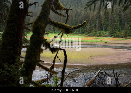 Landscape with big trees in Scenery Cove, Thomas Bay, Petersburg, Southeast Alaska. Thomas Bay is located in southeast - Stock Photo