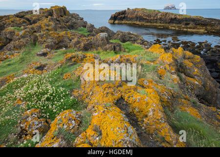 UK, Scotland, East Lothian, North Berwick, Bass Rock - Stock Photo
