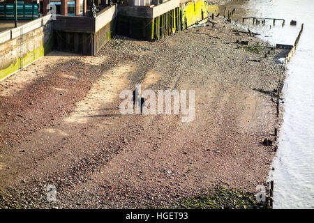 Two people walking on a pebble beach created by low tide o the north bank of the river Thames, London, UK - Stock Photo