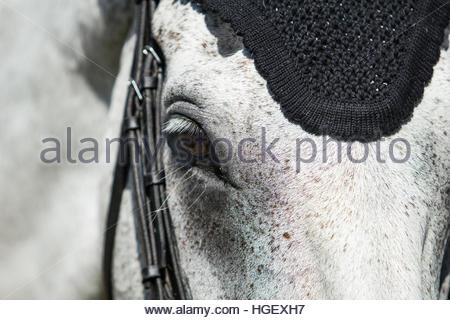 Land Rover Burghley Horse Trials 2016, 1st-4th September, Peterborough, Stamford, UK - Stock Photo