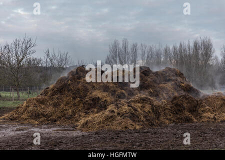 Horse Manure Pile - Stock Photo