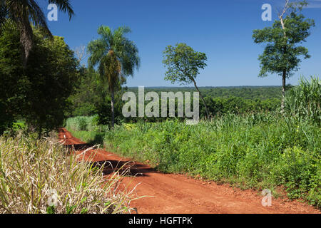 Dirt road running through sub-tropical rainforest, Andresito, Iguazu National Park, Misiones Province, The Northeast, - Stock Photo