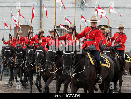 Canada American Mounted Police Ontario Horse Rider Stock