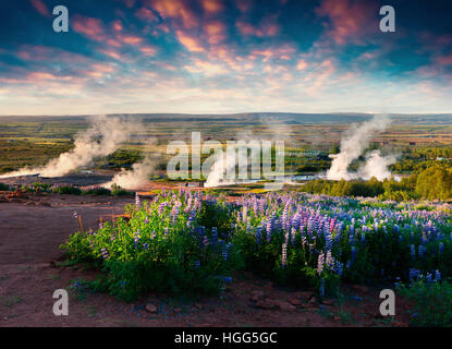 Erupting of the Great Geysir lies in Haukadalur valley on the slopes of Laugarfjall hill. Foggu summer morning in - Stock Photo