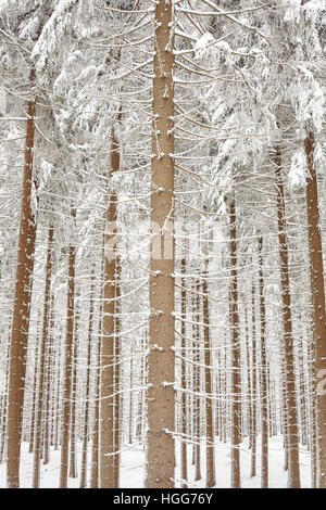 Snow covered tree trunks, natural background, selective focus. - Stock Photo