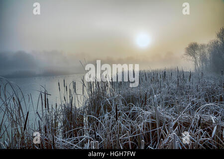 Sunrise over reed beds, St Michael's Mead, frost and ice - Stock Photo