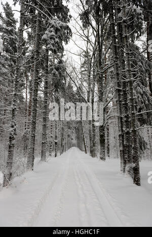 car tire tracks on winter road in deep snow in lonely forest - Stock Photo