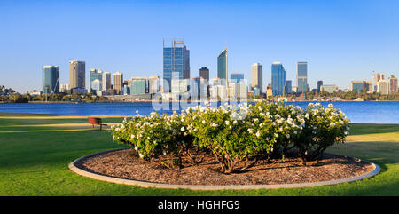 A bed of roses on South Perth Esplanade with the Swan River and Perth city in the distance. - Stock Photo