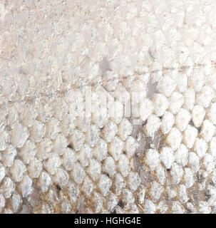 salmon fish scales grunge texture background - Stock Photo