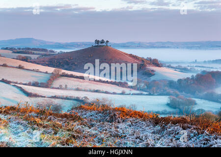 Bridport, Dorset, UK. 23rd Jan, 2017. UK Weather. A heavy frost and valley mist at Colmers Hill at Bridport in Dorset, - Stock Photo