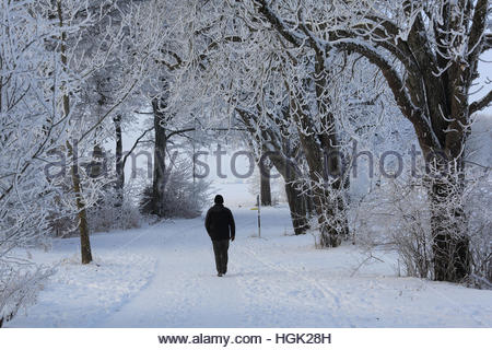 Icking, Bavaria. 23rd Jan, 2017. A man walks through woods near Icking in Bavaria as temperatures remain very cold - Stock Photo