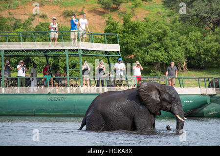 Tourists on a river safari in Chobe National Park, Botswana, Africa - Stock Photo