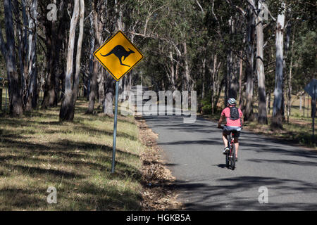 Male cyclist passing kangaroo road sign on country road Hunter Valley New South Wales NSW Australia - Stock Photo