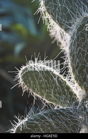 Close focus on cactus in low key scene with sunlight from behind inside indoor garden - Stock Photo