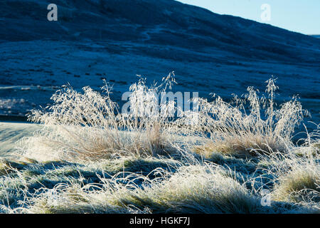Hoar frost on grass lit up by the sun in the Scottish borders. Scotland - Stock Photo