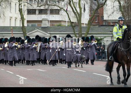 Buckingham Palace, London, UK. 10th January 2017. Irish Wolfhound Domhnall, regimental mascot of the Irish Guards, - Stock Photo