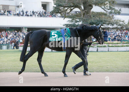 Kyoto, Japan. 5th Jan, 2017. Fiero Horse Racing : Fiero is led through the paddock before the Sports Nippon Sho - Stock Photo