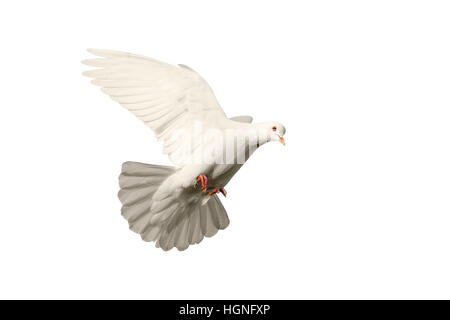 E Mail Symbol Mail Icon With Dove Stock Photo 150276135 Alamy