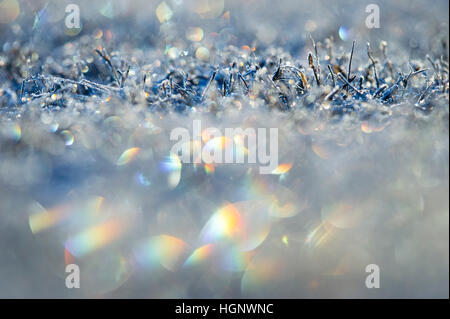 The frosty and frozen grass creates a colorful rainbow of colors as the early morning sun shines from behind. - Stock Photo