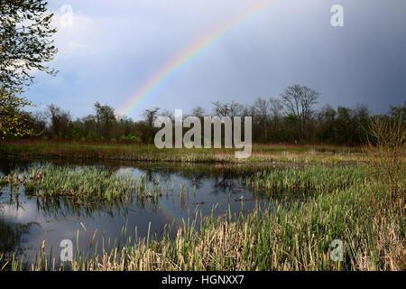 Rainbow over marsh Ohio - Stock Photo