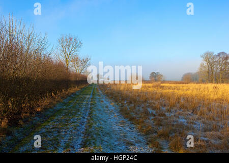 A frost covered bridleway with dry, golden grasses by a hawthorn hedgerow in the scenic Yorkshire wolds landscape - Stock Photo