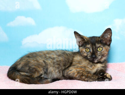 Eight week old Torbie Tabby Kitten laying on a pink blanket with blue sky background with clouds. copy space - Stock Photo