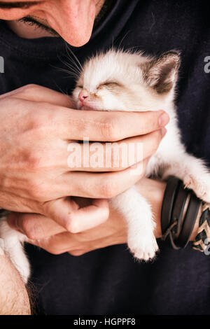 Young man's hands holding a baby siamese kitty - Stock Photo