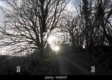 Winter trees and hedgerows along country lane at sundown in winter Carmarthenshire Wales UK  KATHY DEWITT - Stock Photo