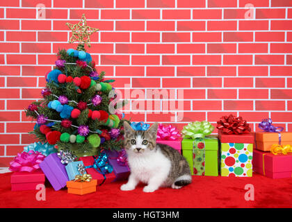 black, brown and white tabby kitten looking above viewer, crouched on red fur carpet by christmas tree, decorated - Stock Photo