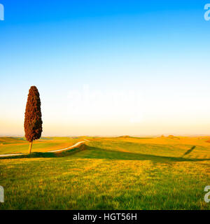 Tuscany, lonely cypress tree, white rural road and shadow on on sunset. Siena, Orcia Valley, Italy, Europe. - Stock Photo