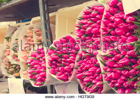 Spring tulip bulbs / tulips for sale in the autumn at the ...