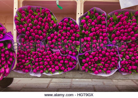 Bouquets of Tulip Flowers on the Market for Sale Bulbs of tulips - Stock Photo
