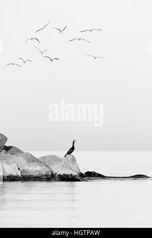 Birds over above rocks in the sea - Stock Photo