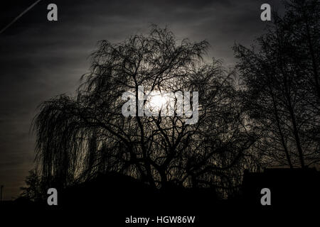 Silhouette of big tree in the park - Stock Photo