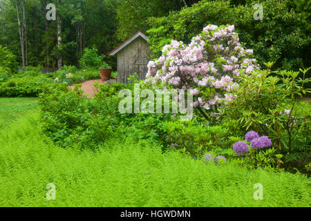 Thuya Gardens in Northeast Harbor, Maine. - Stock Photo