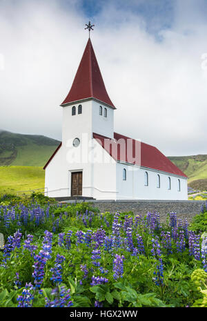 Lupins in front of the Vik i Myrdal Church, Iceland - Stock Photo