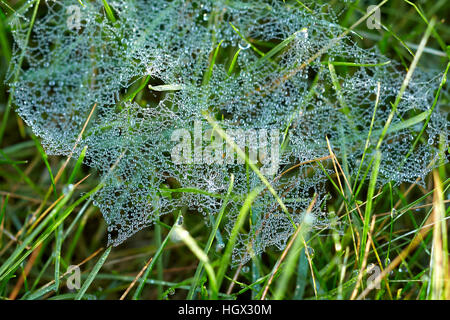 Cobweb in grass covered in morning dew - Stock Photo