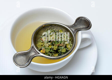 Moringa-Tee in Tasse und Moringablaetter in Teesieb, Moringatee, - Stock Photo