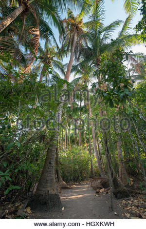 A hiking path through a tropical forest on Iguana Island, Panama. - Stock Photo
