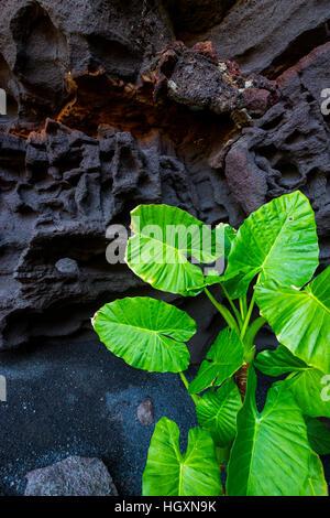 Cave and vegetation in Los Jameos del Agua.  Lanzarote, Canary Islands, Atlantic Ocean, Spain. - Stock Photo