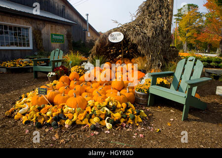 A display of gourds at the Moulton Farm farmstand in Meredith, New Hampshire. - Stock Photo