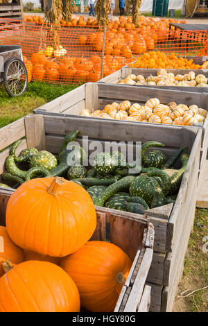 Pumpkins and gourds at the Moulton Farm farmstand in Meredith, New Hampshire. - Stock Photo
