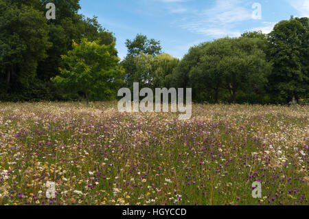 The colours of summer within the wildflower meadow of Coton Manor gardens in Northamptonshire, England - Stock Photo