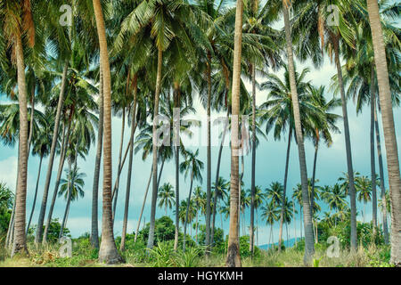 Coconut palms on tropical beach in Koh Samui, Thailand - Stock Photo