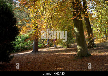 People walking in beech woodland in autumn colours Batsford Arboretum UK