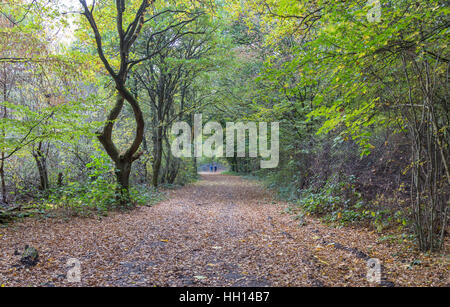 Walkers in the forest. Taken on a bright November day and shows two people walking along a path in the forest. - Stock Photo