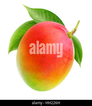 Isolated mango. Whole mango fruit on a branch isolated on white background with clipping path - Stock Photo